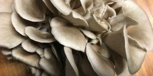 mushrooms Belvedere